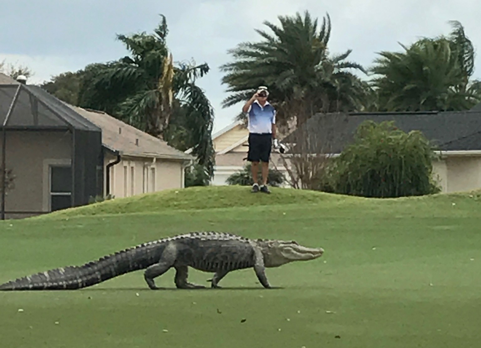 Genial Cliff Jennings Shot This Photo Of An Alligator At Cane Garden Championship  Golf Course.