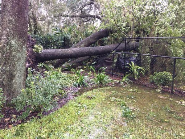 Tree downed on top of fence in Ocala neighborhood