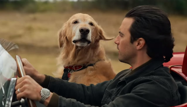 Golden Retriever rates Oscar nod in 'Racing in the Rain'